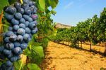 Cuvée 2016 des Vignerons de la Provence Verte